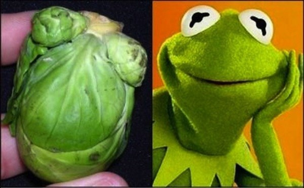 Kermit the Frog and a brusselsprout.