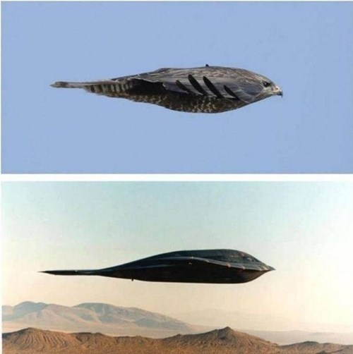 This bird and a B-2 bomber.