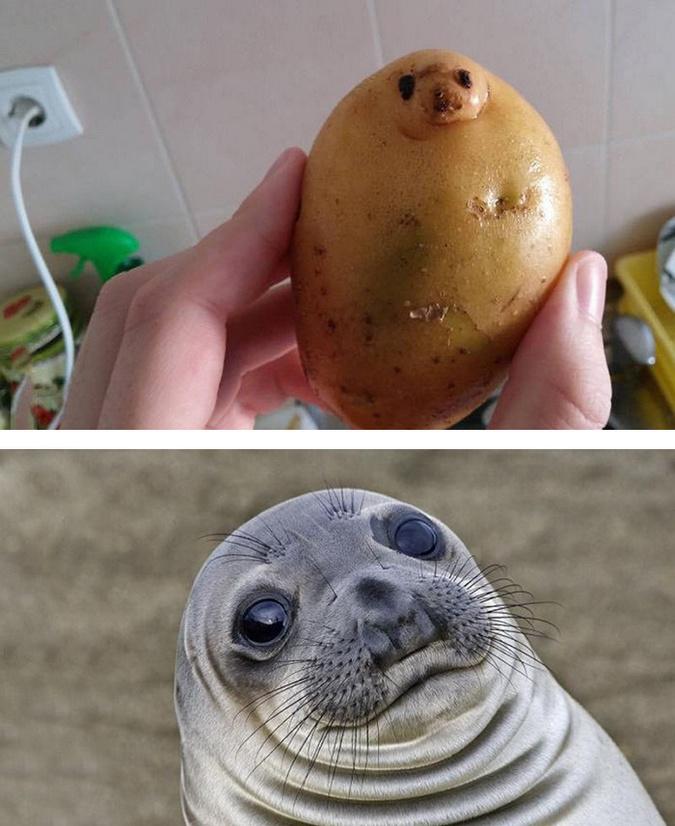 Potato seal