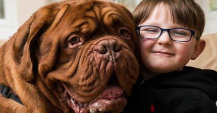 這隻狗狗不論怎麼樣都堅持要走在小主人的右手邊,結果檢查之後才發現「問題大條了」!
