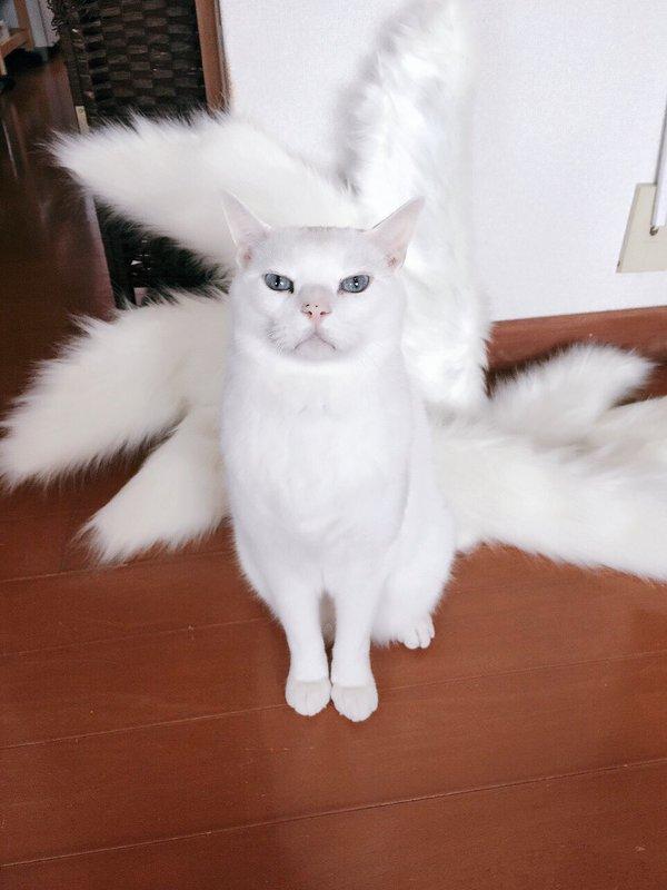 這位正妹把自製的Cosplay九尾道具擺在地上,沒想到家中貓咪走過來後「讓網友瘋狂轉推的奇蹟萌照」就誕生了!