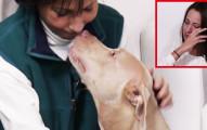 這名女主人帶著狗狗去見寵物溝通師,結果當她說出「狗狗內心對主人前男友的想法」時,女主人就不爭氣淚崩了!