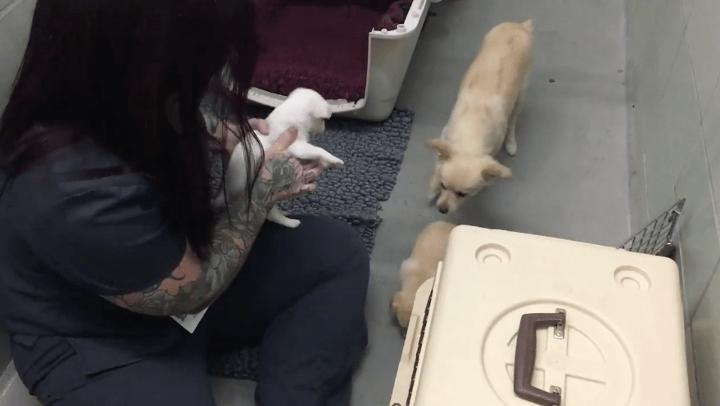 她才剛生產完就被迫跟孩子分離因此很憂鬱,當志工終於把狗寶寶搶回給她時,她的反應會讓你所有人生中的傷口都癒合!
