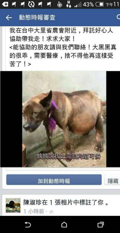 他們看到這隻狗狗肚子大到快活不下去於是帶去醫院檢查,從肚子中抽出的幾大桶讓人太心痛了!
