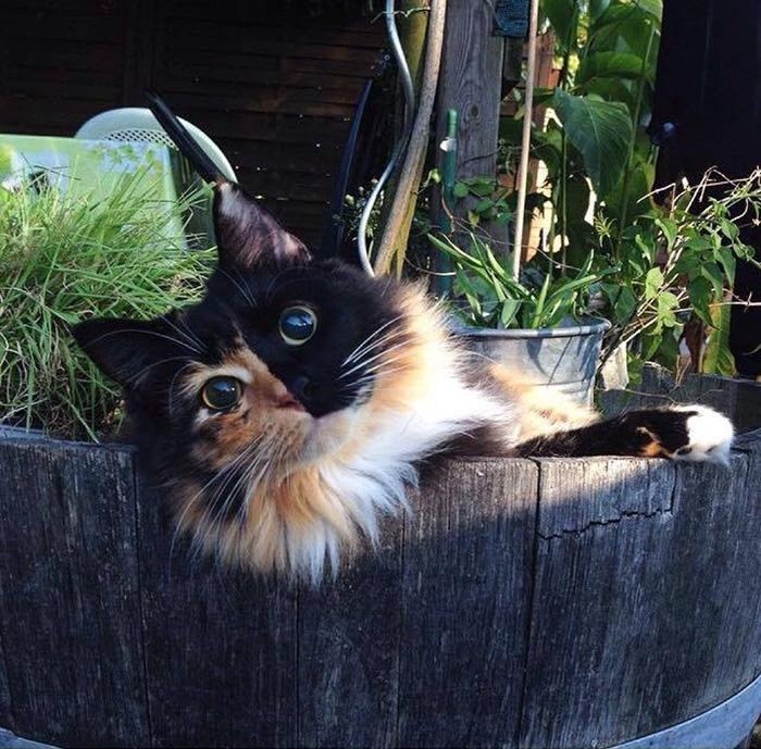 blind-cat-chimera-calico-jasmine-sandra-coudray-7