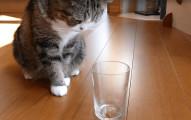 你一定都沒有想到貓咪也有分左右撇子。只要有一個杯子,你就可以測出貓星人是左還是右撇子了!