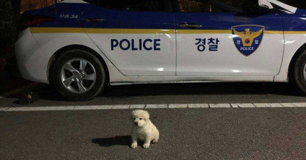 警察伯伯領養超呆萌的小白狗 不到一年變「超大隻」網友笑歪