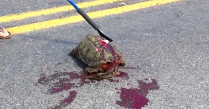 夫婦路上看到一具血淋淋的烏龜被車輾過屍體,好險好奇拿一根棍子碰了一下