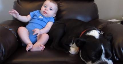 小寶寶便便塞住一直努力終於最後逼出來了!但旁邊「明明說好要照顧寶寶」的狗狗反應讓我笑壞了!
