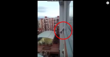 這隻小狗意外卡在陽台眼看就要摔下去,到了第40秒所有人就開始歡呼了!