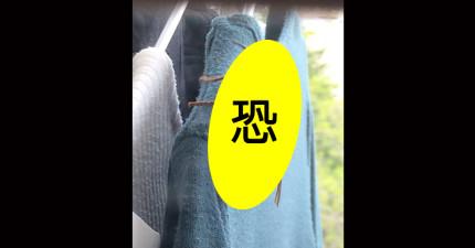 他只是要去陽台拿個衣服,拍到的跟老鼠一樣大的大黃蜂已經讓日本網友都嚇壞了!