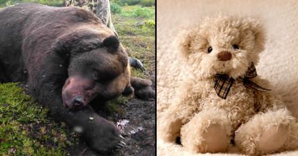 泰迪熊為什麼被叫做「泰迪」熊?聽完「血腥起源故事」後你可能再也無法正視這些毛絨絨的可愛玩偶了...