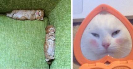 25張就算你笑點很高都會被輕鬆突破的「怎麼看怎麼爆笑」貓咪照片