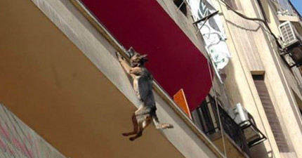 狗狗這樣吊在三樓陽台不斷哀嚎掙扎,「背後的痛苦原因」會讓你眼淚就會像打開水龍頭一樣關不起來了...