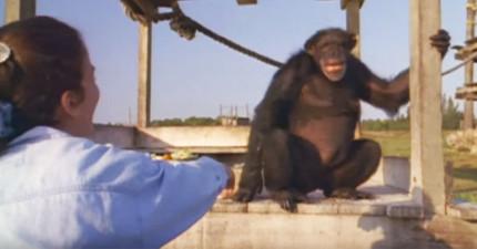 她曾像再生母親一樣照顧過這些猩猩,結果事隔18年後當他們再度重聚時就發生了「最不可能奇蹟」!