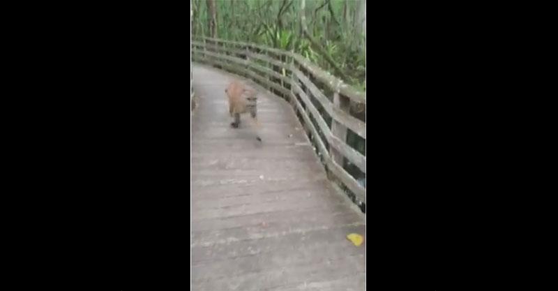 這女子在登山時意外碰到一隻兇猛的野生豹嚇死了,但下一秒他們居然爆笑同步了!