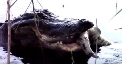 原本男生散步看到鱷魚在水裡進食時已經有點害怕,結果當他看到「早餐是什麼」時他的褲子就全濕了。