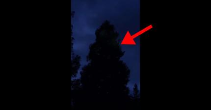 他們坐在家時忽然從外面樹上聽到了最不可能的驚人聲音。一出去看時更被嚇壞立刻錄下來!