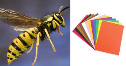 他把一些彩色紙提供給黃蜂蓋蜂窩,過沒多久出現的超美麗建築物看起來太夢幻了!