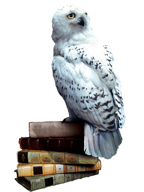 Hedwig_books