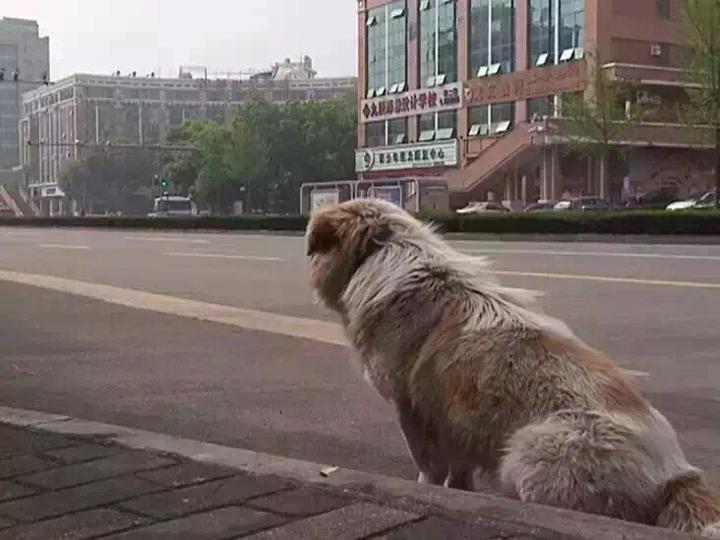 棄犬旺仔「公車站癡等7天7夜」不肯離開半步 主人終於現身時反應讓人心碎