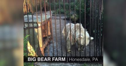 這隻骨瘦如柴的熊被虐待30年看起來就跟一條狗一樣瘦小,看到她5個月後模樣時你會超感動!