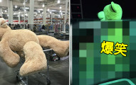 Costco賣的大熊熊該怎麼帶回家?這位網友分享的「唯一妙招」萌呆到路上駕駛笑得方向盤猛打滑...