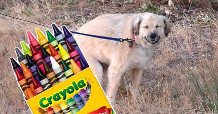 這名網友分享「當狗狗不小心吃下彩色蠟筆後便便會長得什麼模樣」。