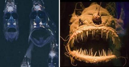 19種「超乎想像恐怖海底生物」證明地獄其實就在海底!