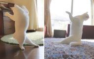 主人出門想要知道家裡貓咪在做什麼,結果回家一看到影片才知道家裡貓咪根本就是人類啊!