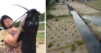 日本部落客在香港惡臭河流釣起1.1公尺巨大塘虱,他的「超恐怖食記」讓人光看文字就要吐了!