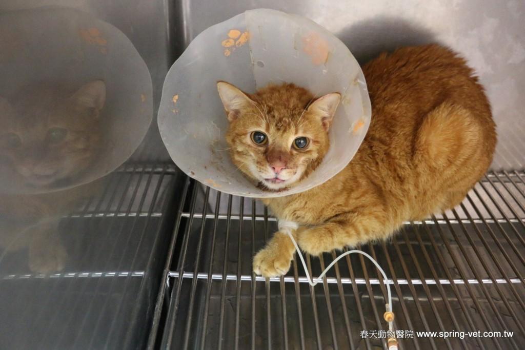 女飼主將被暴打的愛貓送到醫院後獸醫師表示「只能送養或換男友」,她的選擇讓小貓咪的貓生都改變了!