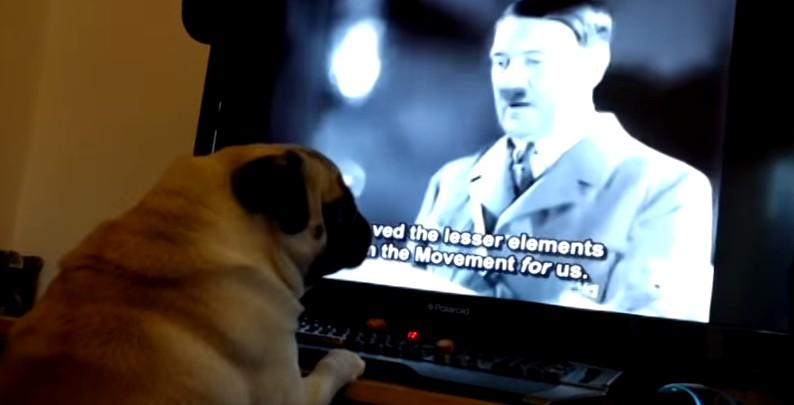這名男子因為把狗狗洗腦成納粹狗而被逮捕 (是真的)。狗狗做出的行為太讓人傻眼了...