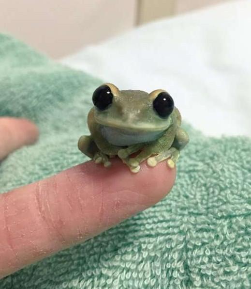 史上最萌小樹蛙靠「珍珠大眼」贏得上萬粉絲,他「化身杯緣」露出的超滿足笑容會把你融化成一灘水!