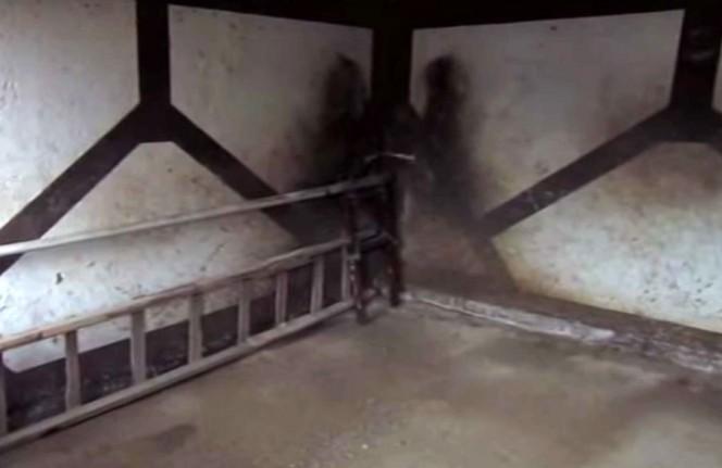 這名男子在自己家倉庫的補鼠籠裡,發現了一隻像是「另外一個世界的恐怖生物」,嚇到他一生難忘...