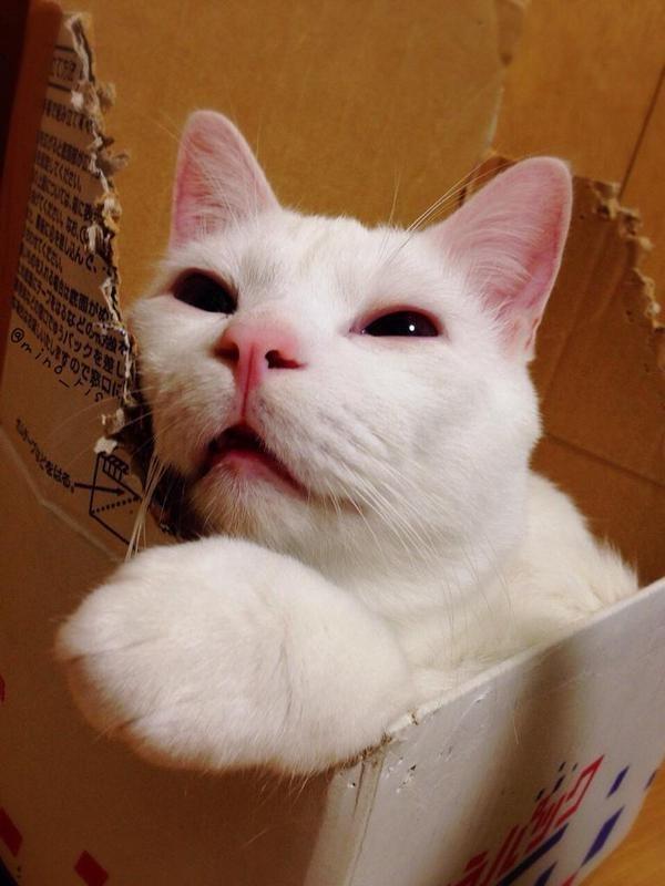 這隻貓咪清醒時萌到爆炸,但他「睡著後的地獄崩壞模樣」才是他紅遍日本出寫真的真正原因!