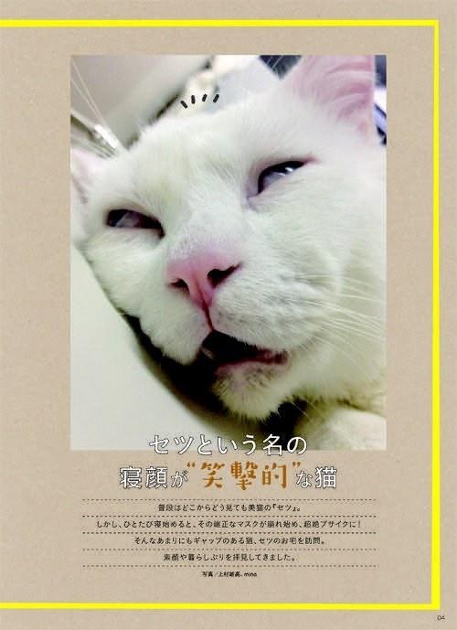Japan's awesome new superstar cat.