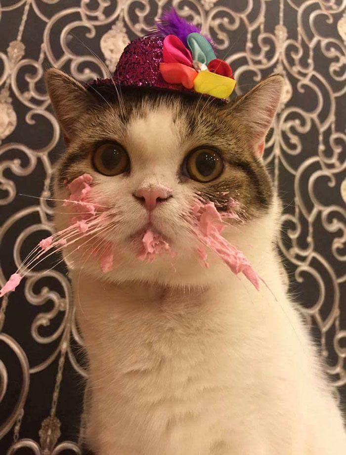 這隻小貓咪吃可口蛋糕時還可看出有貓性,當一吃完露出的「死奴才」表情才讓人發現大條了!