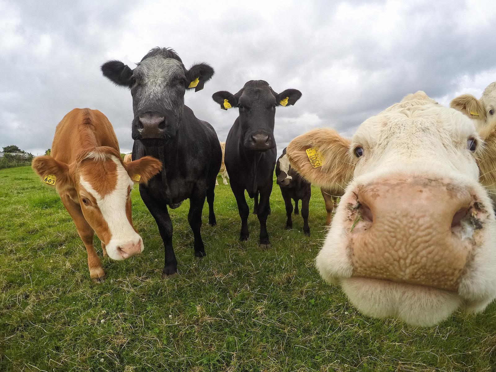 14個你為什麼必須要立刻停止喝牛奶的「我們一直被蒙在鼓裡嚴重原因」