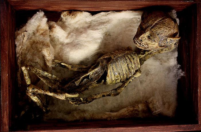 他們打開孤兒院中塵封百年的地窖,裡面的「神龍、吸血鬼、小仙子的神秘骨骸」根本可以拍一整季影集了!