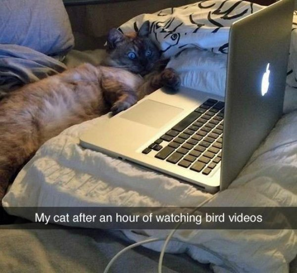 animals cool fun 28 Animals are the engine that drives the internet (37 Photos)