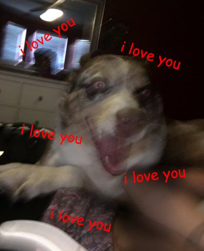 Basically, owning a dog: