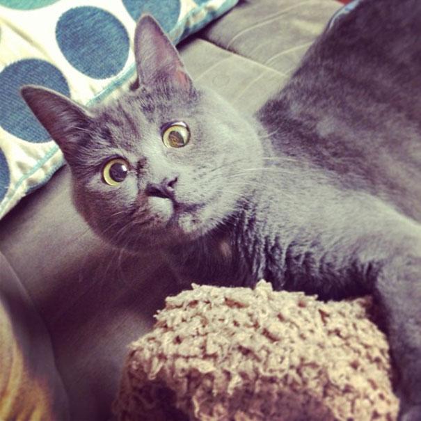 這隻爆萌貓咪24小時都是「OMG表情」,但知道「背後比超人還堅毅」的原因後你就會忍不住為他流淚鼓掌!