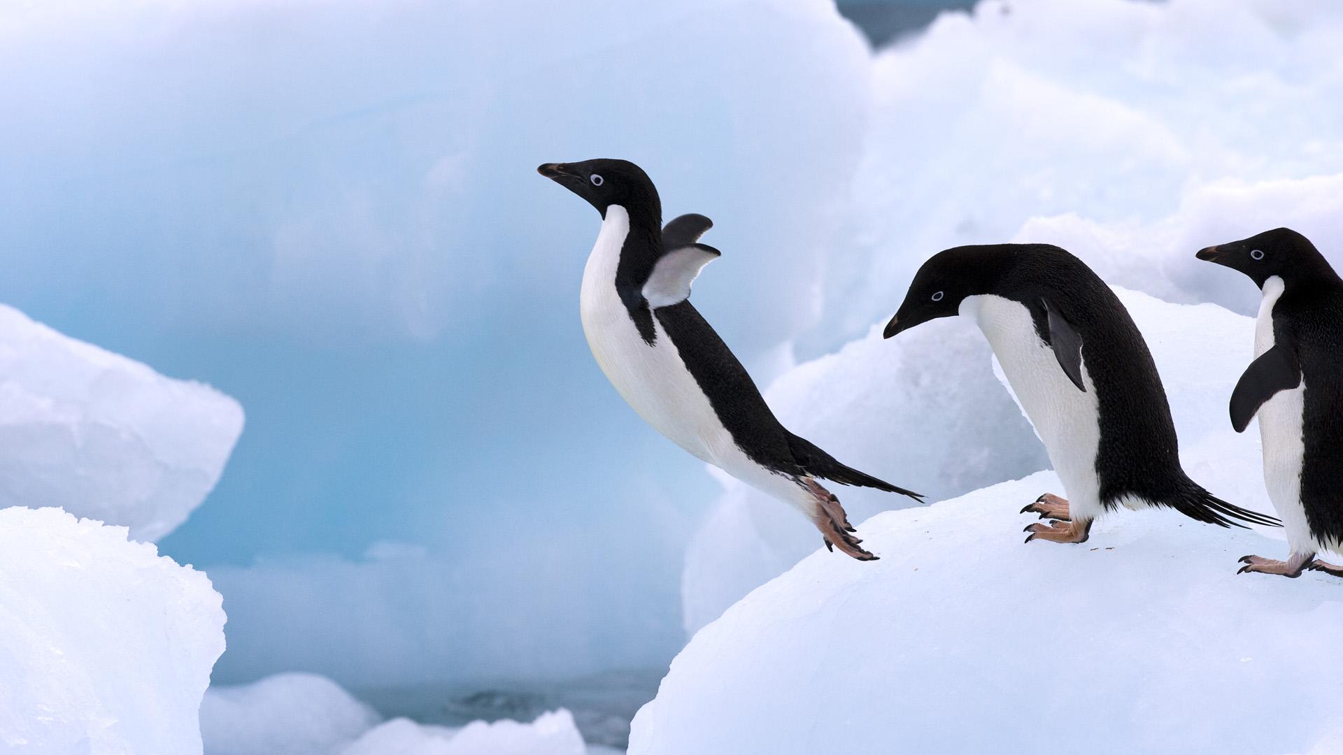 學者花2年在南極研究企鵝愛愛的方式,研究結果恐怖變態到他不敢發表!