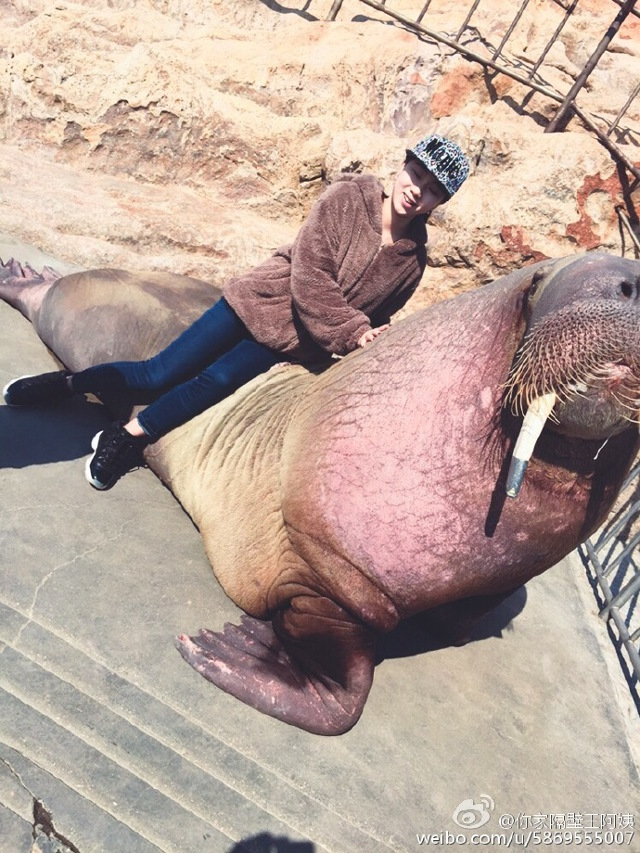 這名原本在跟海象玩自拍的男子「被拖進水中溺斃」,網友看到動物園的「無保護」設施都說不出事才怪!