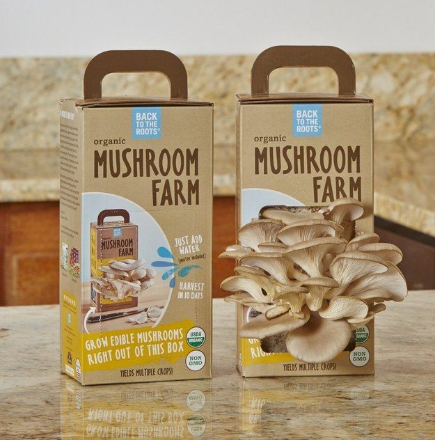 A kit for turning your kitchen into a petite mushroom farm.