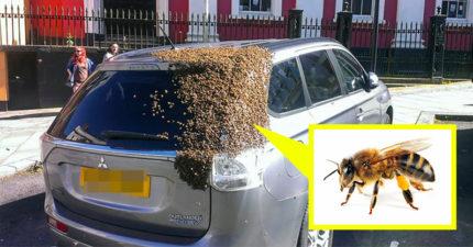 她被「2萬隻蜜蜂」狂追48小時 一打開車廂才發現「蜜蜂的忠心」!