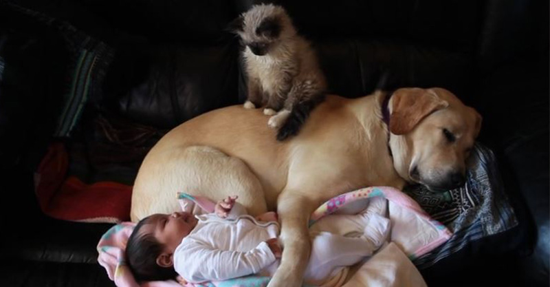 「小寶寶午睡時身邊還有兩隻毛小孩護駕」超溫馨,沒想到下一秒寶寶一噴便便...兩隻動物的反應太可愛了!
