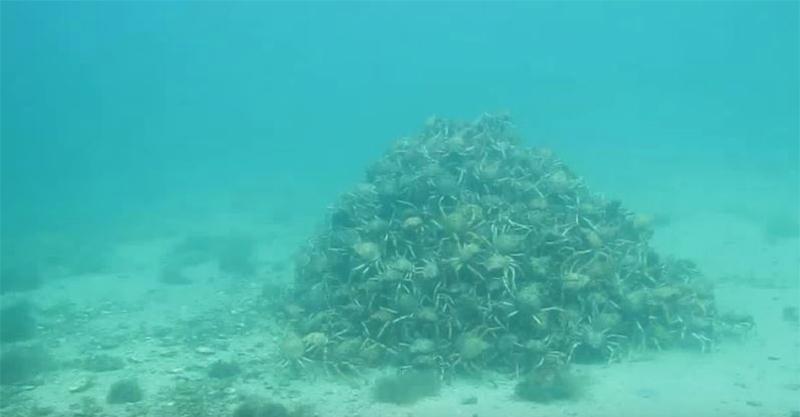 潛水員意外找到傳說中的「海底神秘金字塔遺跡」,但靠近一看才發現這個金字塔「會動」讓他狂起雞皮疙瘩!