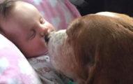 當家裡的寶寶嚴重中風時,家人看到狗狗跳到床上做的事情讓他們都發現太低估狗狗了!